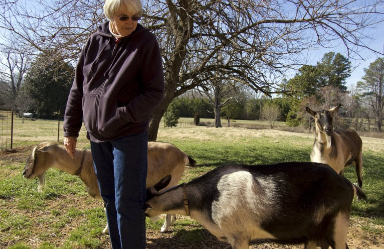 12_goats